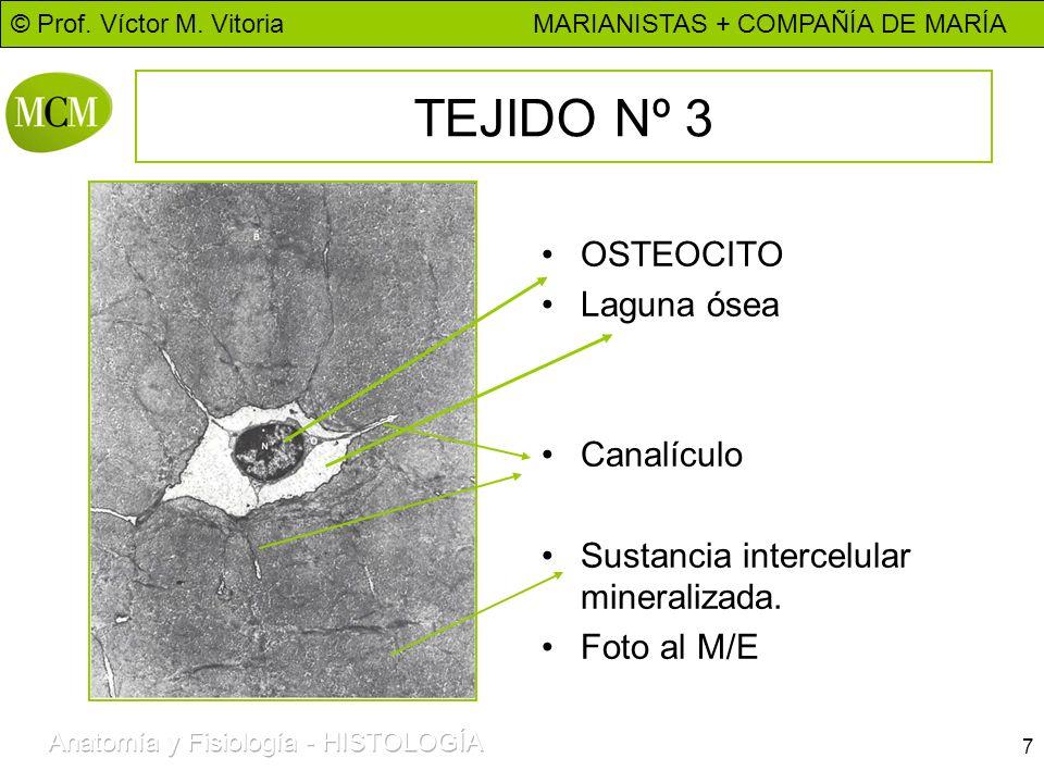 TEJIDO Nº 3 OSTEOCITO Laguna ósea Canalículo