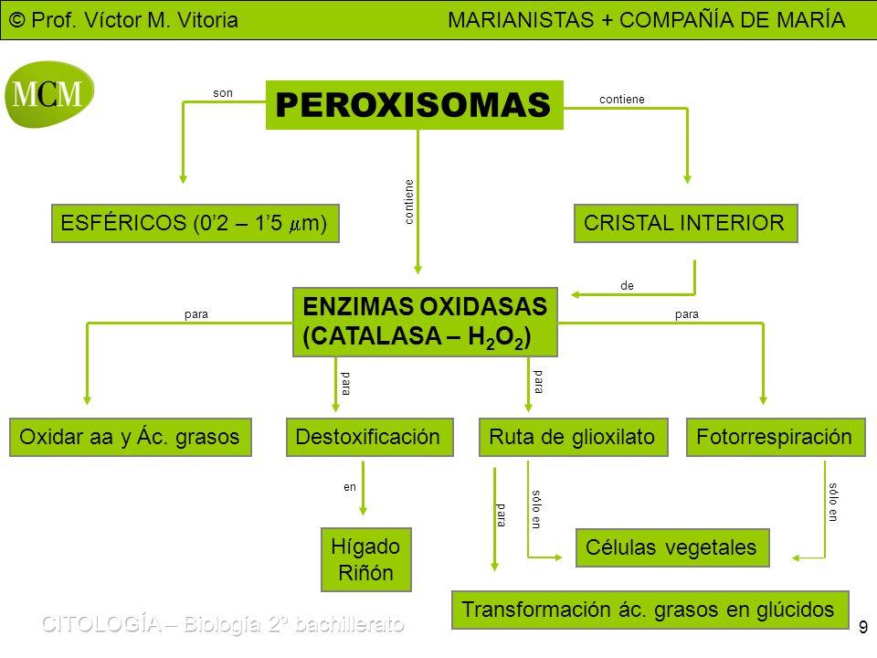 PEROXISOMAS ENZIMAS OXIDASAS (CATALASA – H2O2)