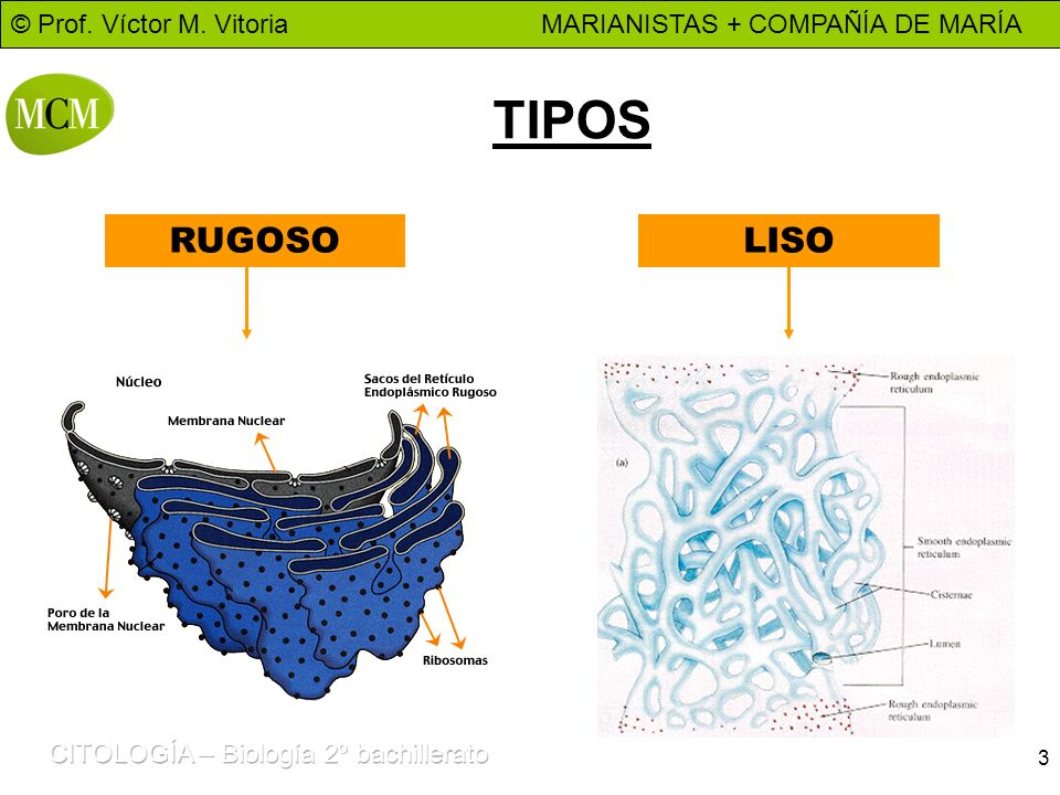 TIPOS RUGOSO LISO