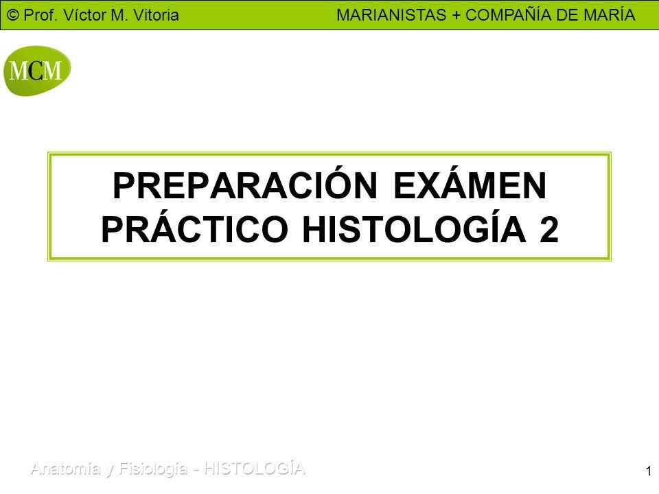 PREPARACIÓN EXÁMEN PRÁCTICO HISTOLOGÍA 2 - ppt video online descargar