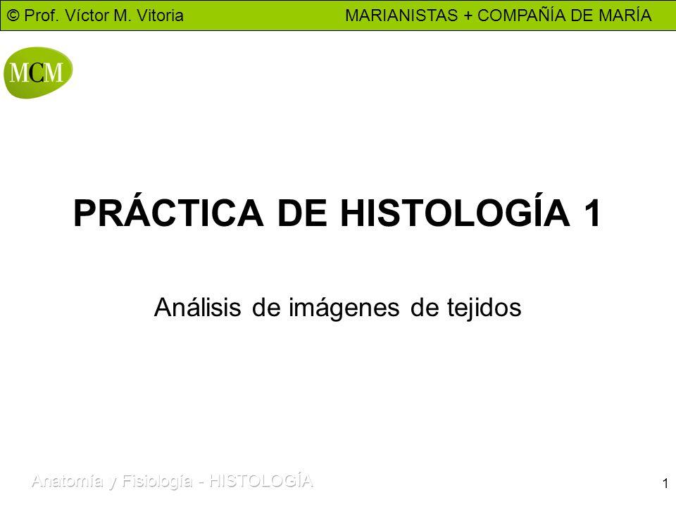 PRÁCTICA DE HISTOLOGÍA 1