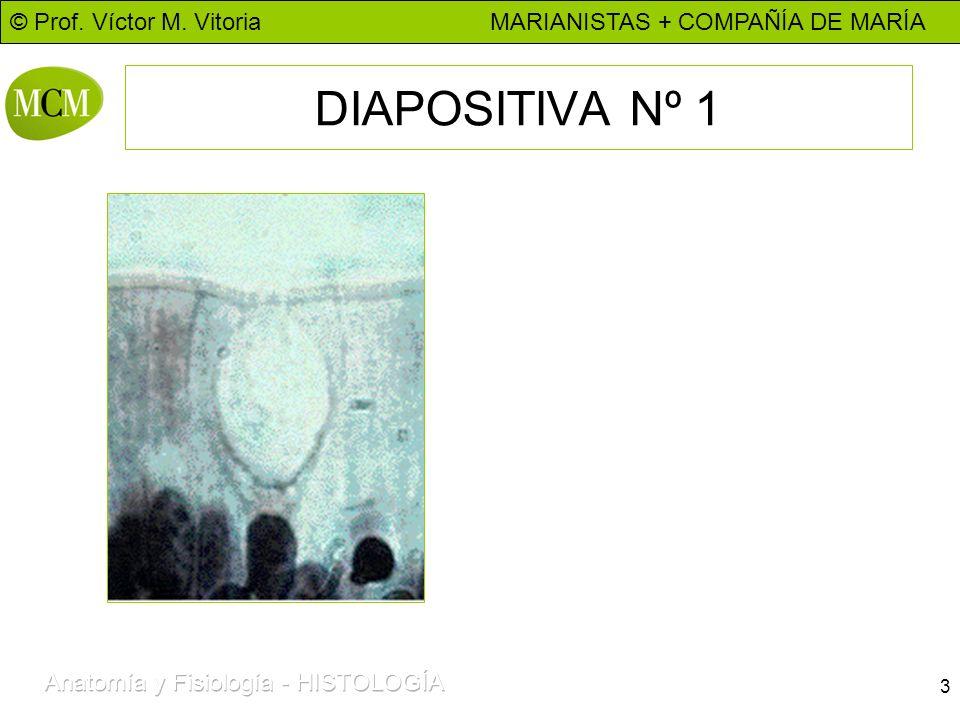 DIAPOSITIVA Nº 1