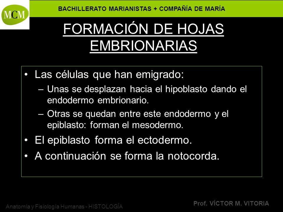 FORMACIÓN DE HOJAS EMBRIONARIAS