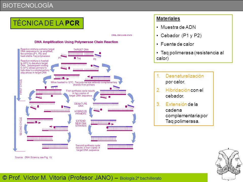 TÉCNICA DE LA PCR Materiales Muestra de ADN Cebador (P1 y P2)