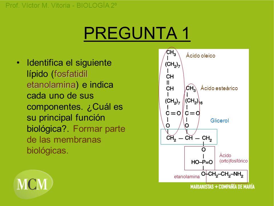 PREGUNTA 1 Ácido oleico.