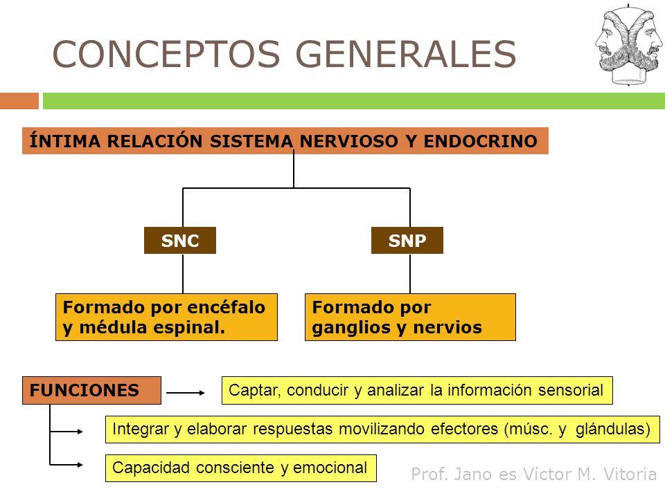 CONCEPTOS GENERALES ÍNTIMA RELACIÓN SISTEMA NERVIOSO Y ENDOCRINO SNC