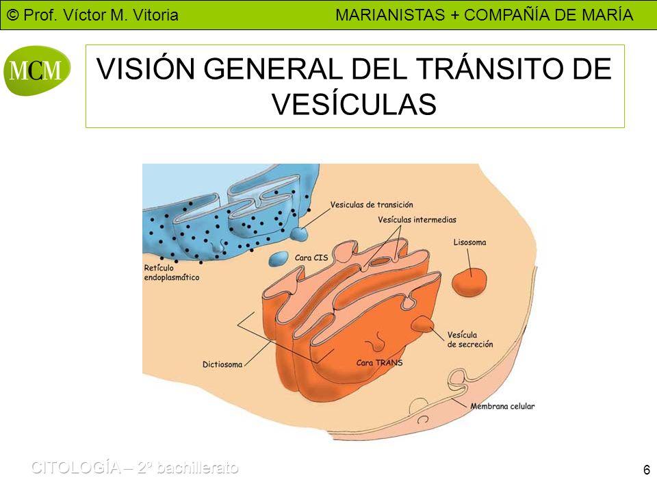 VISIÓN GENERAL DEL TRÁNSITO DE VESÍCULAS
