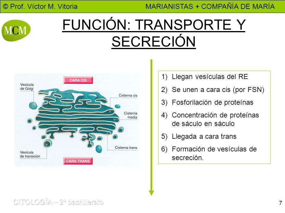 FUNCIÓN: TRANSPORTE Y SECRECIÓN