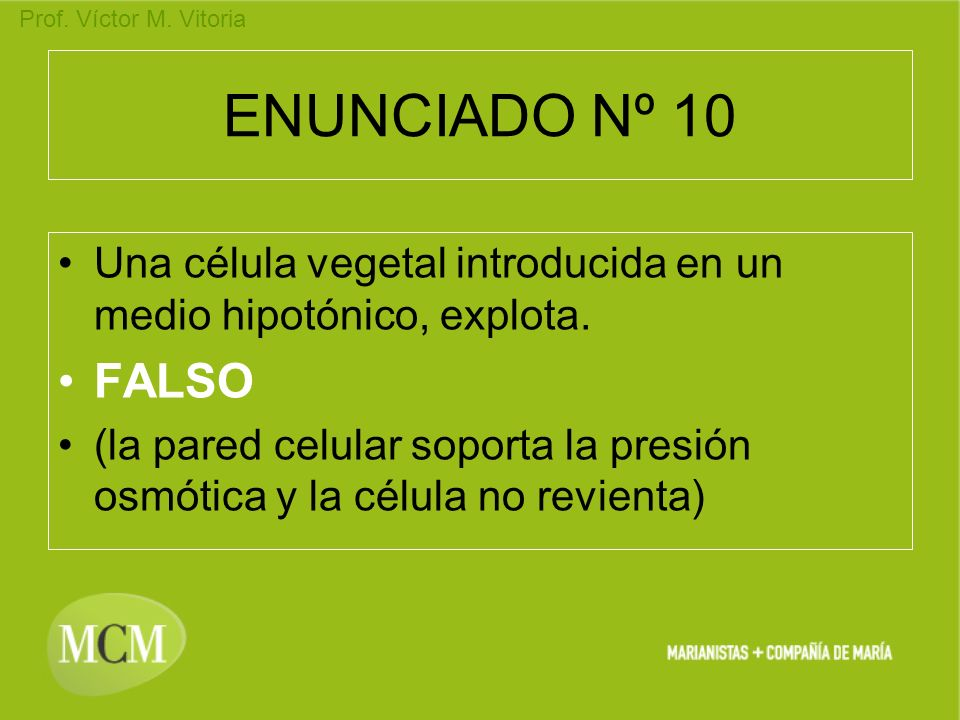 ENUNCIADO Nº 10 Una célula vegetal introducida en un medio hipotónico, explota. FALSO.