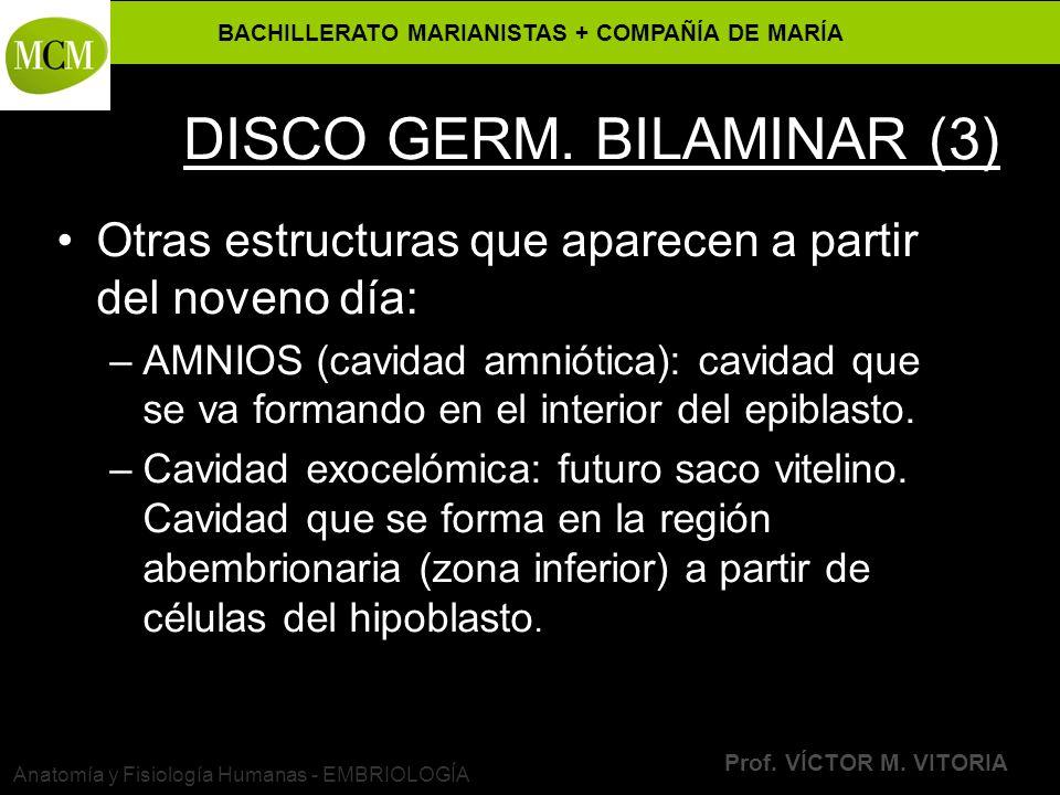 DISCO GERM. BILAMINAR (3)