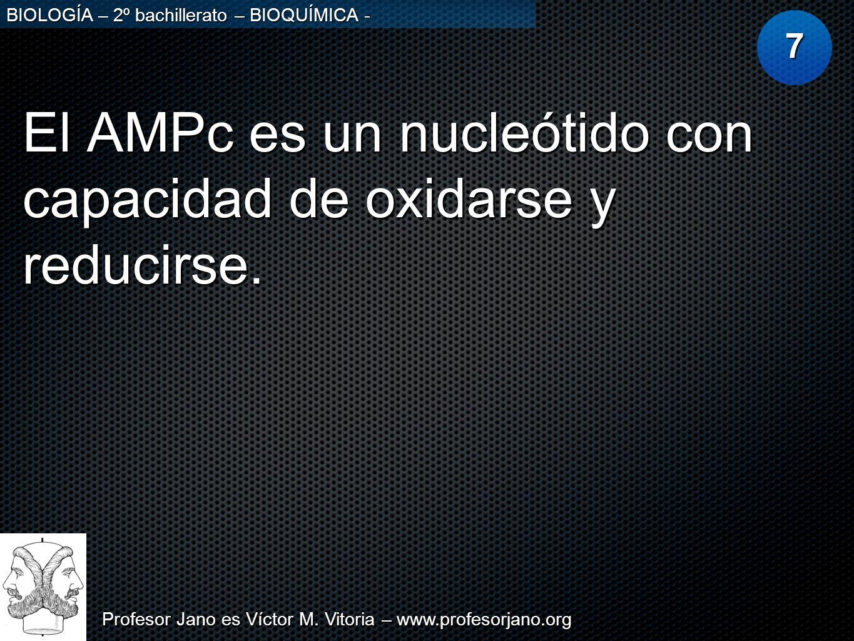 El AMPc es un nucleótido con capacidad de oxidarse y reducirse.