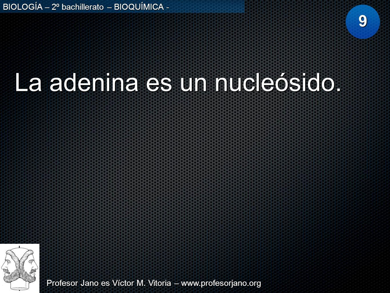 La adenina es un nucleósido.