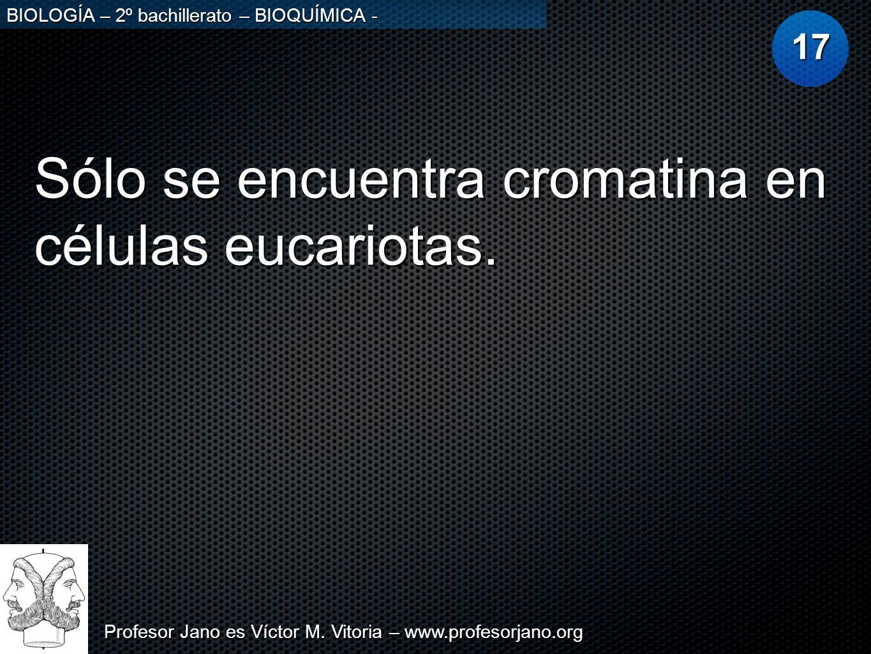 Sólo se encuentra cromatina en células eucariotas.