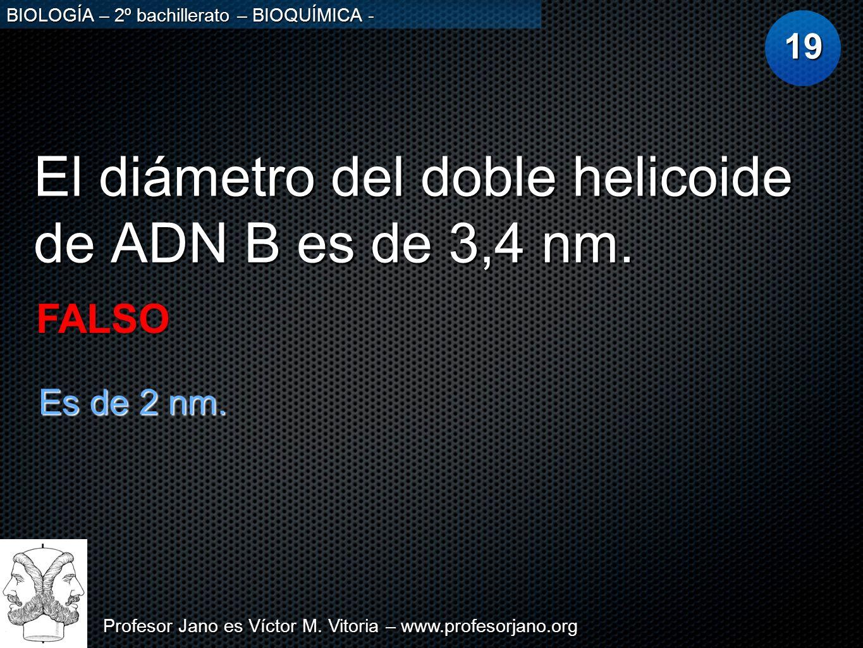 El diámetro del doble helicoide de ADN B es de 3,4 nm.