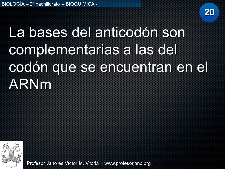 20 La bases del anticodón son complementarias a las del codón que se encuentran en el ARNm