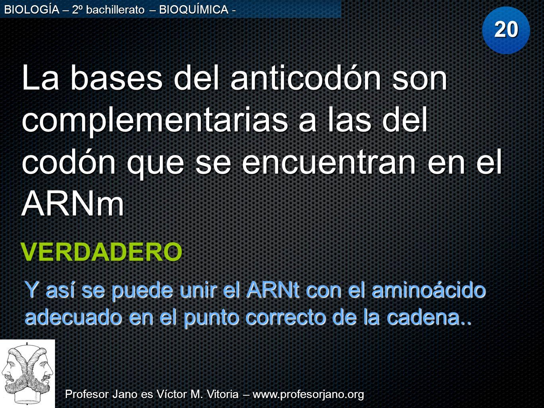 20 La bases del anticodón son complementarias a las del codón que se encuentran en el ARNm. VERDADERO.