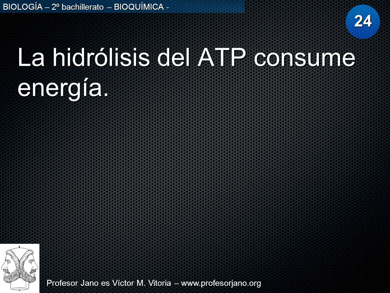 La hidrólisis del ATP consume energía.