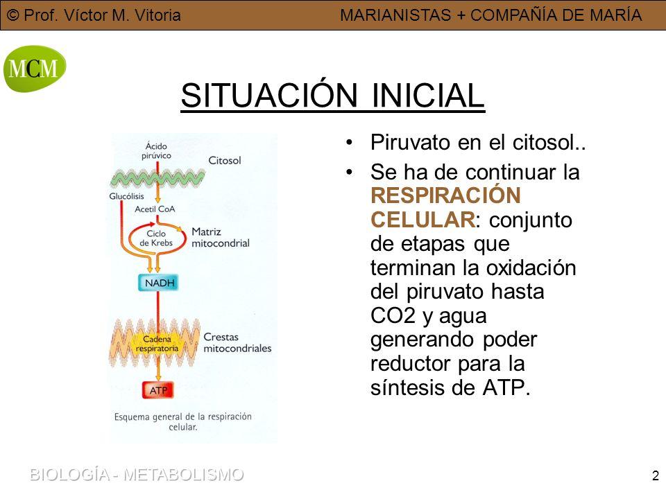 SITUACIÓN INICIAL Piruvato en el citosol..