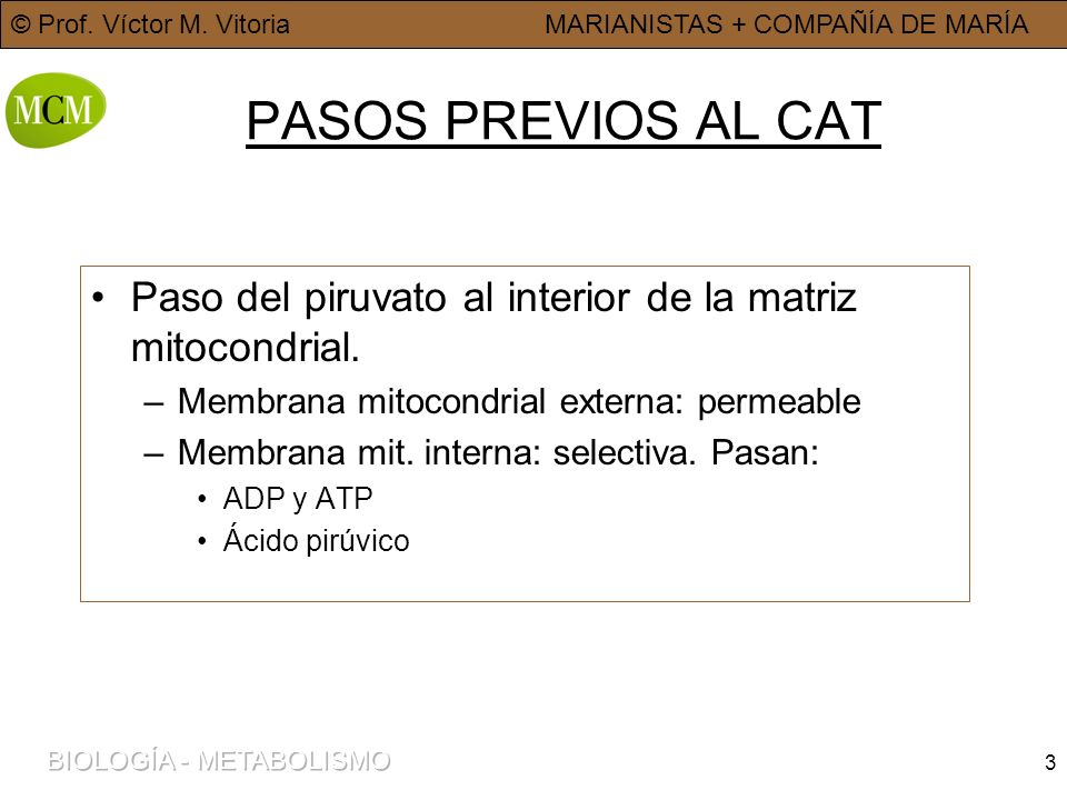PASOS PREVIOS AL CAT Paso del piruvato al interior de la matriz mitocondrial. Membrana mitocondrial externa: permeable.