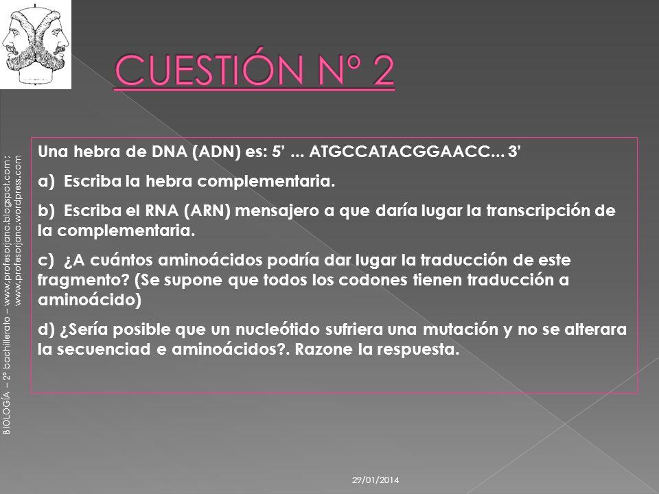 CUESTIÓN Nº 2 Una hebra de DNA (ADN) es: 5' ... ATGCCATACGGAACC... 3'