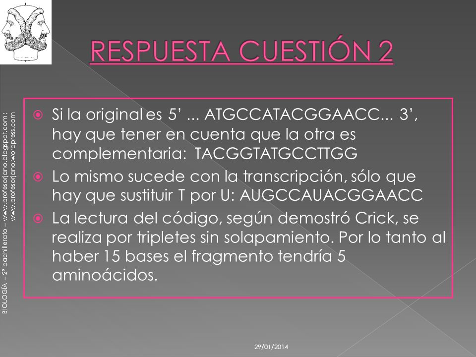 RESPUESTA CUESTIÓN 2 Si la original es 5' ... ATGCCATACGGAACC... 3', hay que tener en cuenta que la otra es complementaria: TACGGTATGCCTTGG.