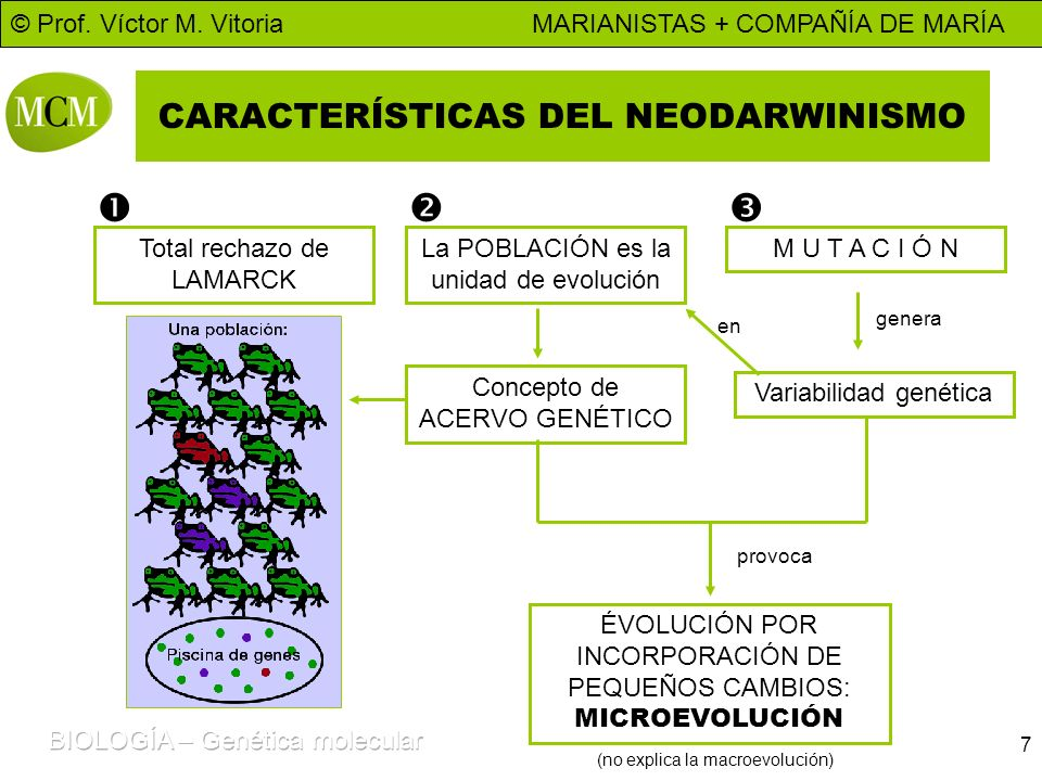 CARACTERÍSTICAS DEL NEODARWINISMO