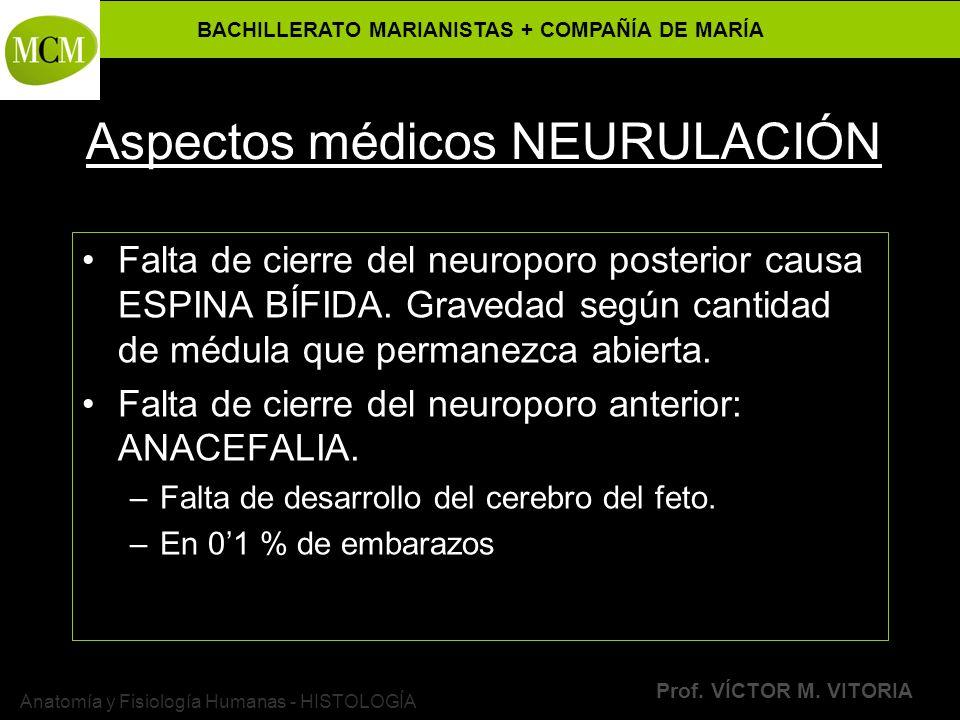 Aspectos médicos NEURULACIÓN