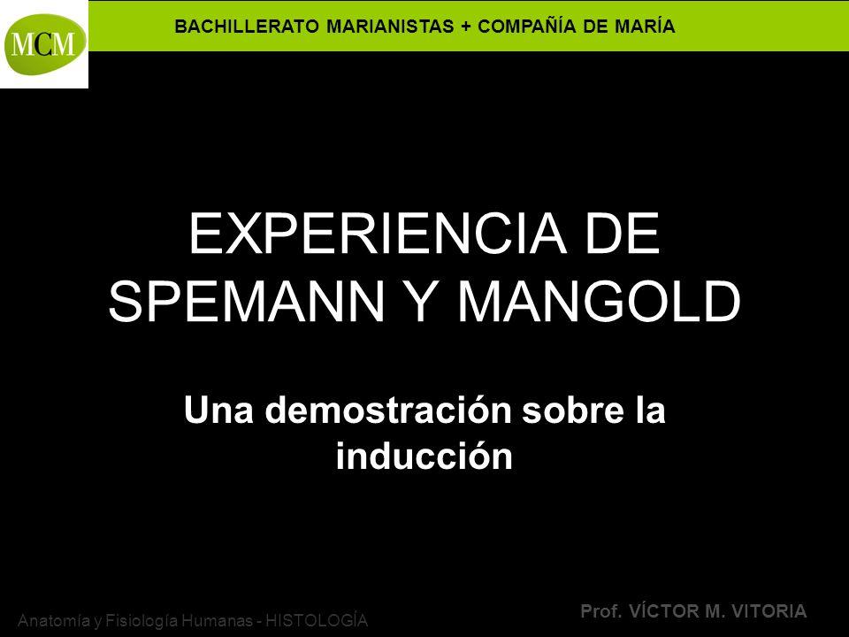 EXPERIENCIA DE SPEMANN Y MANGOLD