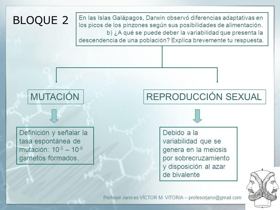 BLOQUE 2 MUTACIÓN REPRODUCCIÓN SEXUAL