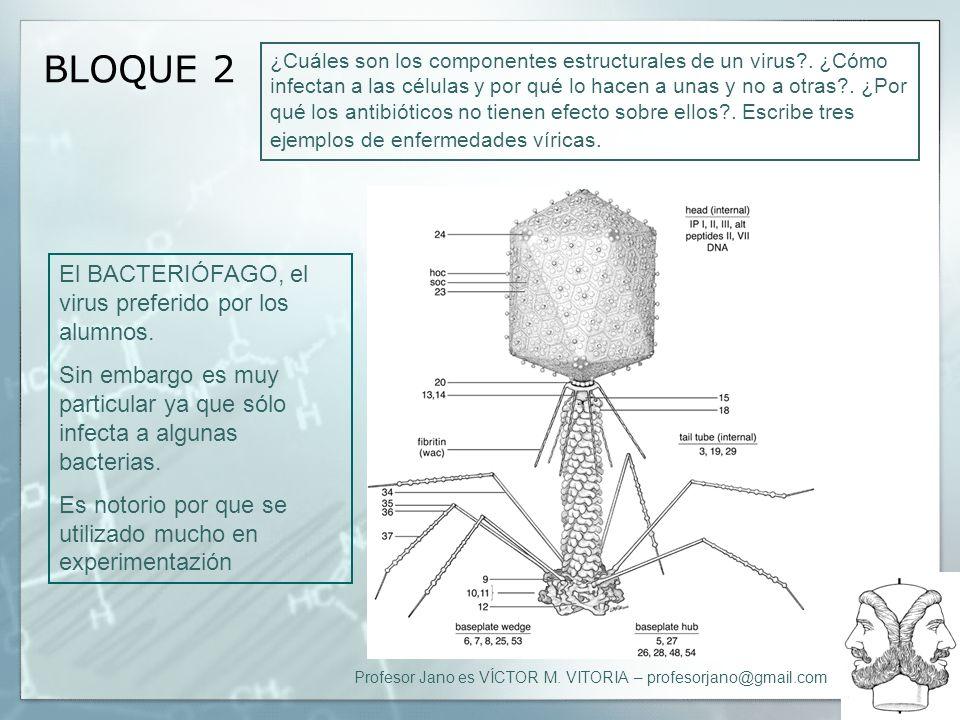 BLOQUE 2 El BACTERIÓFAGO, el virus preferido por los alumnos.