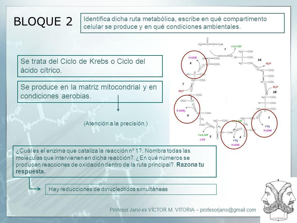 BLOQUE 2 Se trata del Ciclo de Krebs o Ciclo del ácido cítrico.