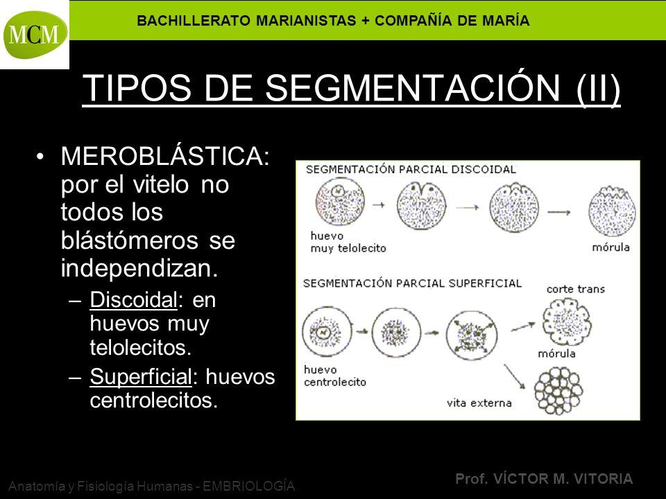TIPOS DE SEGMENTACIÓN (II)