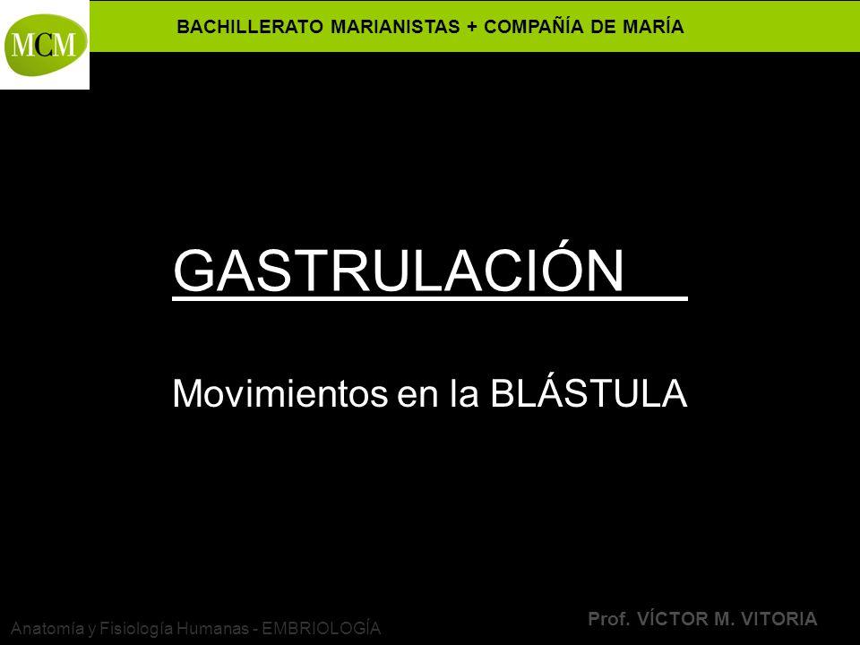 VÍCTOR M. VITORIA es PROFESOR JANO Movimientos en la BLÁSTULA