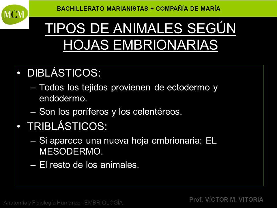 TIPOS DE ANIMALES SEGÚN HOJAS EMBRIONARIAS