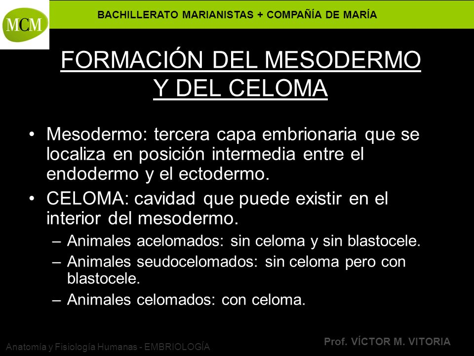 FORMACIÓN DEL MESODERMO Y DEL CELOMA