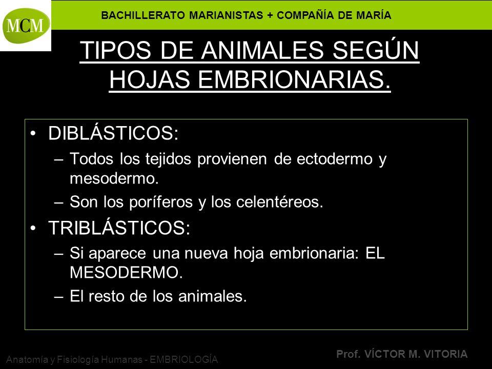 TIPOS DE ANIMALES SEGÚN HOJAS EMBRIONARIAS.