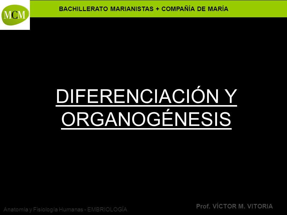 DIFERENCIACIÓN Y ORGANOGÉNESIS