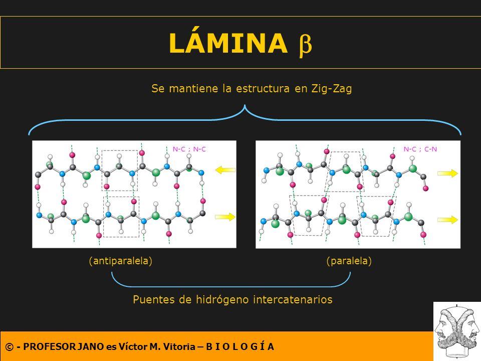 LÁMINA b Se mantiene la estructura en Zig-Zag