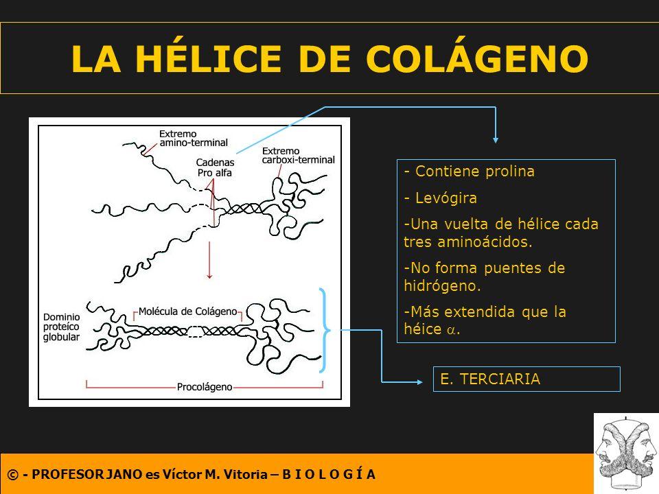 LA HÉLICE DE COLÁGENO - Contiene prolina - Levógira