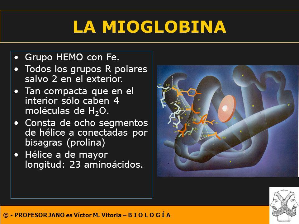 LA MIOGLOBINA Grupo HEMO con Fe.