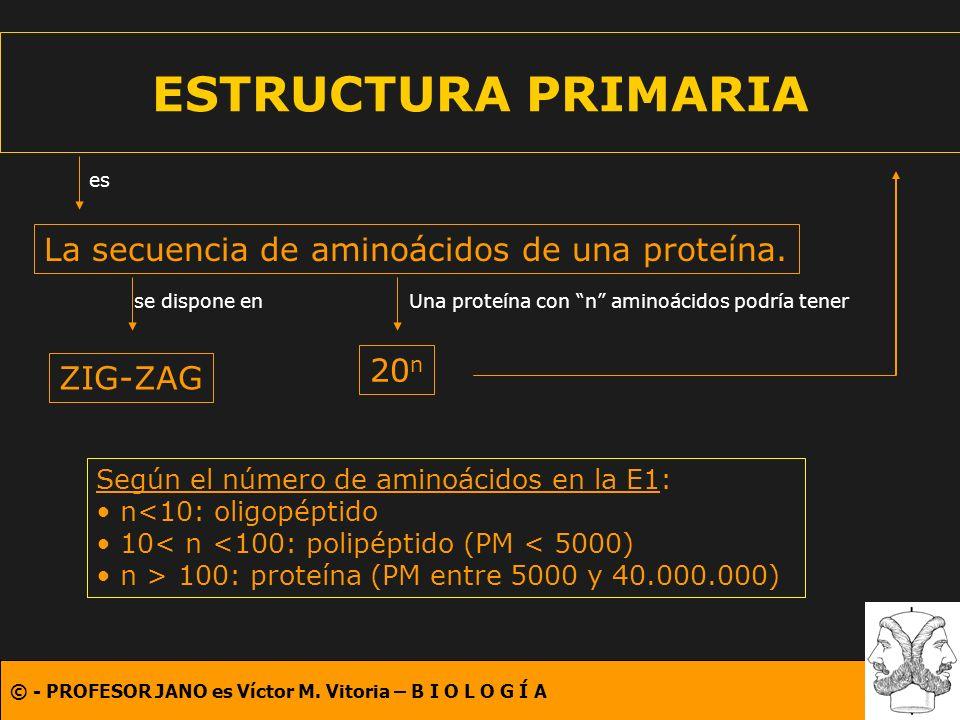 ESTRUCTURA PRIMARIA La secuencia de aminoácidos de una proteína. 20n