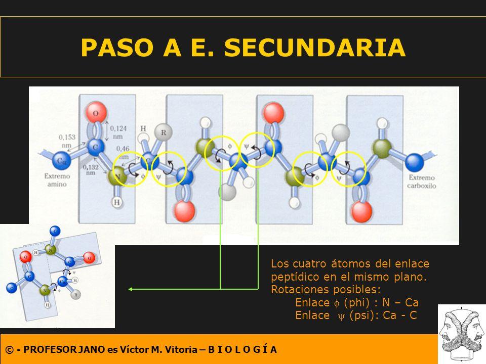 PASO A E. SECUNDARIA Los cuatro átomos del enlace peptídico en el mismo plano. Rotaciones posibles: