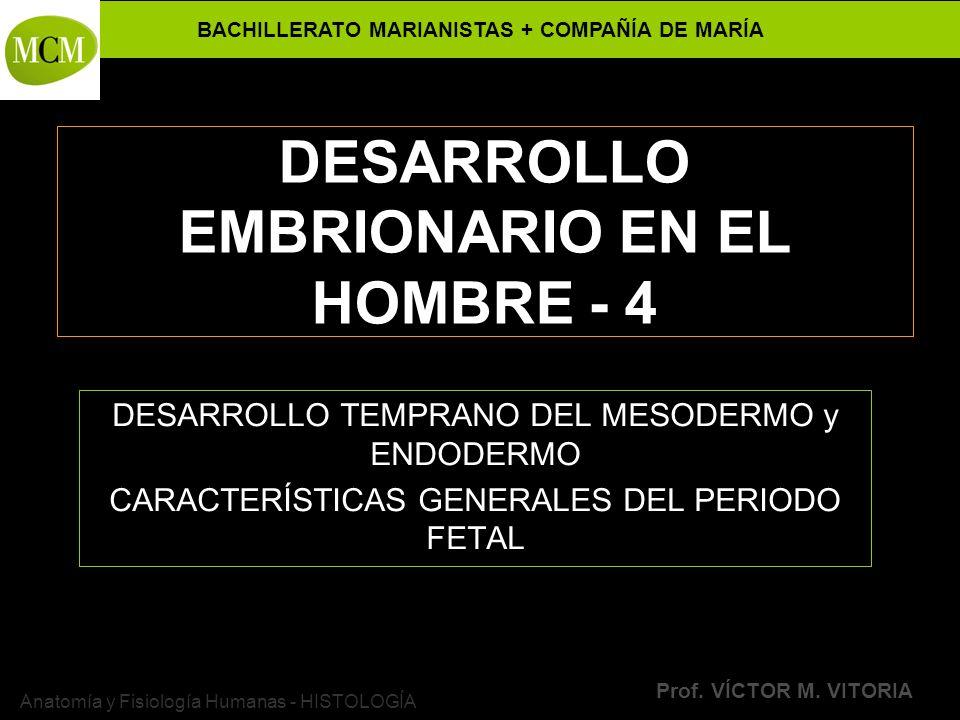 DESARROLLO EMBRIONARIO EN EL HOMBRE - 4