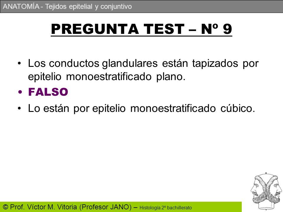 PREGUNTA TEST – Nº 9 Los conductos glandulares están tapizados por epitelio monoestratificado plano.