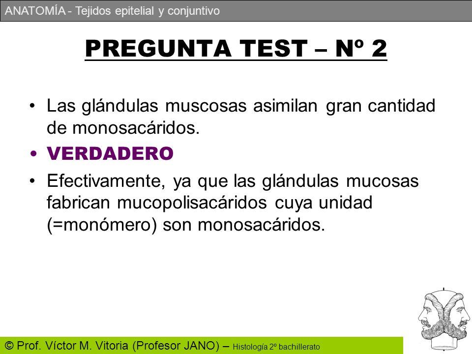 PREGUNTA TEST – Nº 2 Las glándulas muscosas asimilan gran cantidad de monosacáridos. VERDADERO.