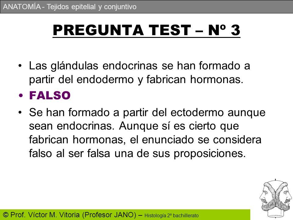 PREGUNTA TEST – Nº 3 Las glándulas endocrinas se han formado a partir del endodermo y fabrican hormonas.