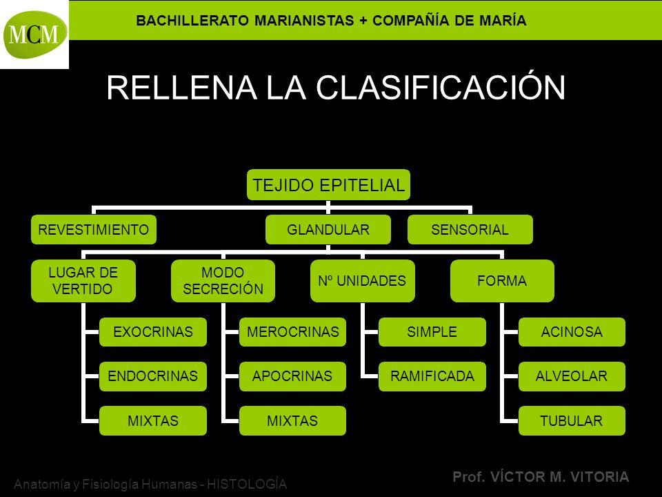 RELLENA LA CLASIFICACIÓN
