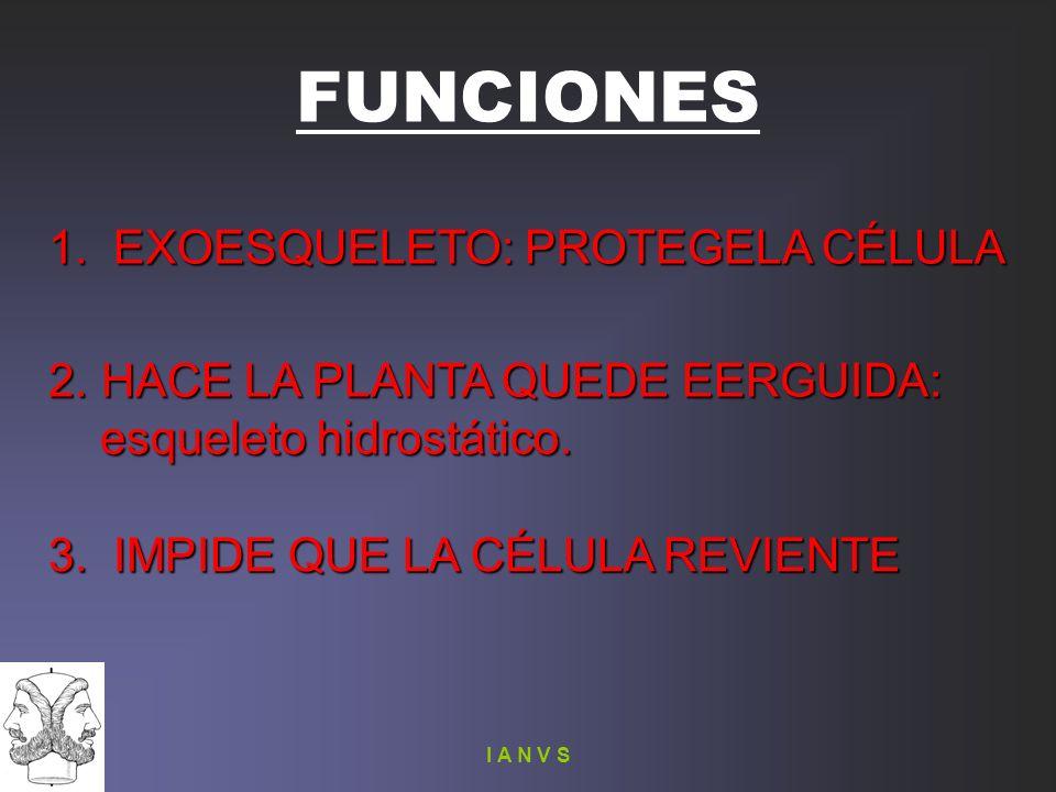 FUNCIONES 1. EXOESQUELETO: PROTEGELA CÉLULA