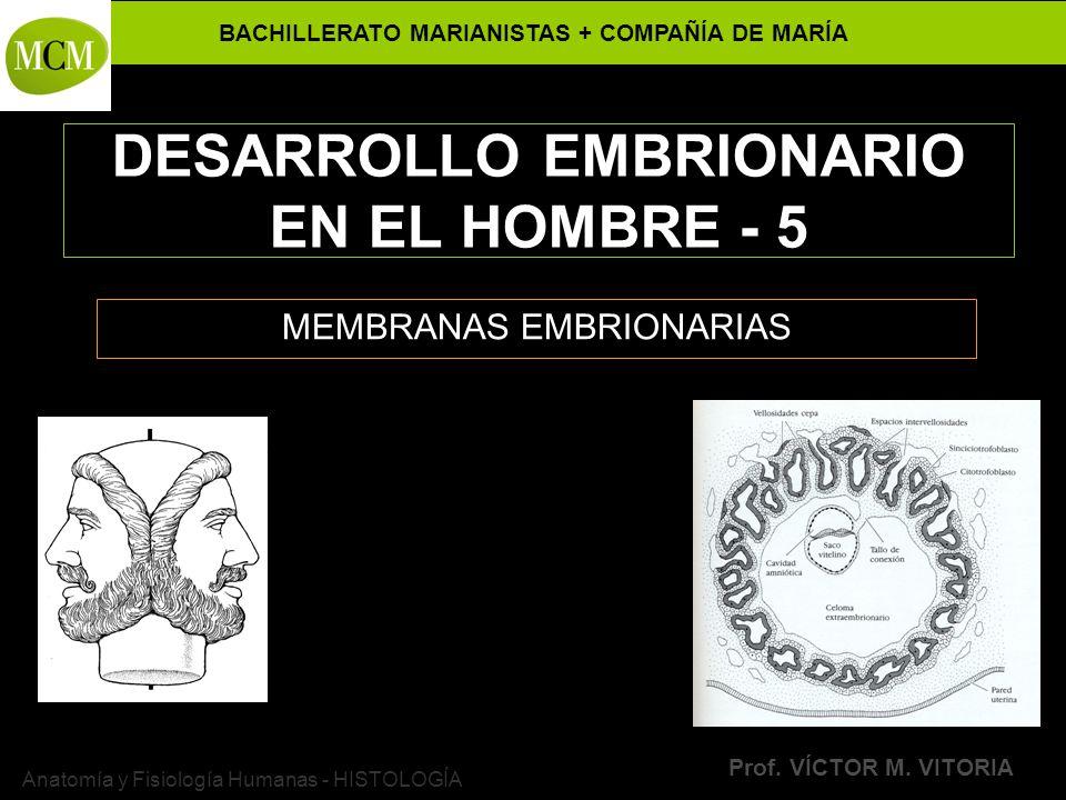 DESARROLLO EMBRIONARIO EN EL HOMBRE - 5