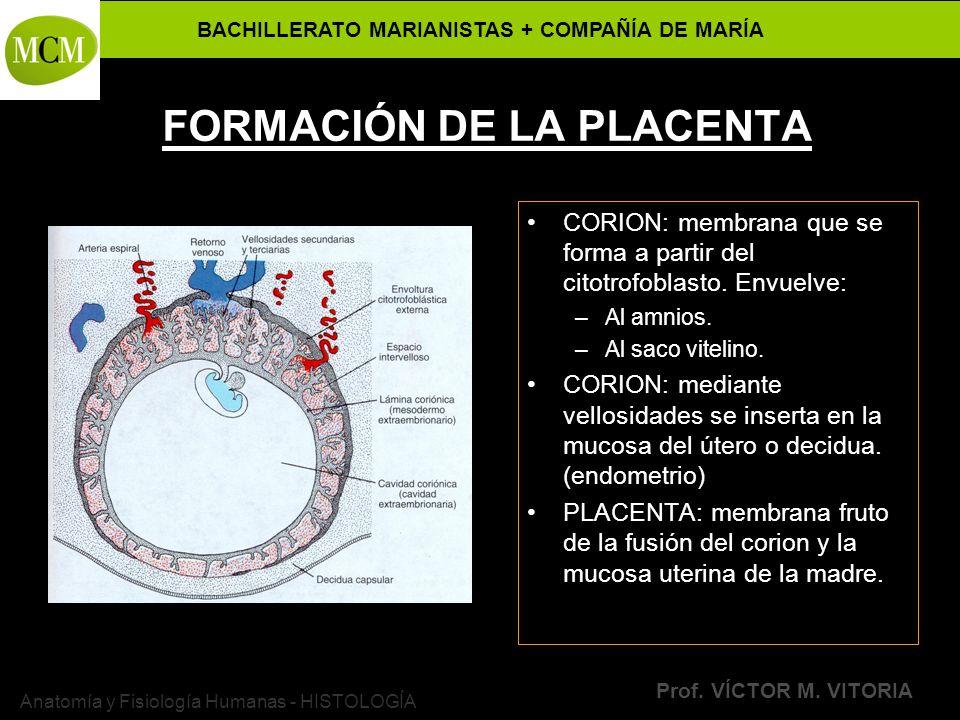 FORMACIÓN DE LA PLACENTA